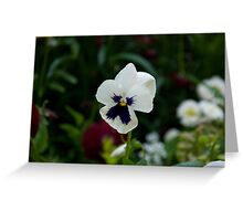Pansies 3 Greeting Card