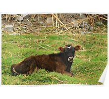 Calf in a Meadow Poster