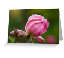 Rose 17 Greeting Card