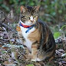 Bella - A Neighbour's New Cat by aussiebushstick