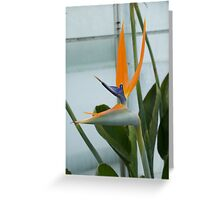 Bird of Paradise 4 Greeting Card