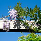 Over hanging flowers 2 by Georgia Conroy