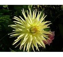 Flower 60 Photographic Print