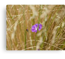 Flowers in the Hay Canvas Print