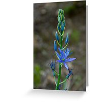 Flowers 63 Greeting Card