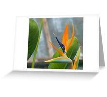 Bird of Paradise 8 Greeting Card