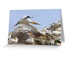Fly by - Saltee Island, County Wexford, Ireland Greeting Card