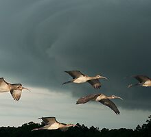 Lets Get out of Here, The Storms a coming by Photography by TJ Baccari