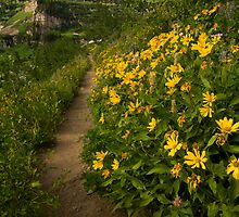 Alluring Trail by Kent Keller
