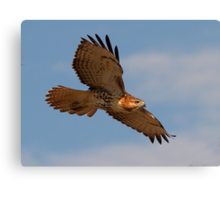 082711 Red Tailed Hawk Canvas Print