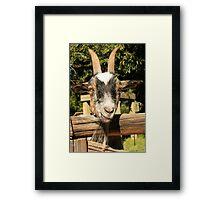 Mr. Goat Framed Print