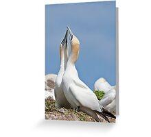 Gannets greeting, Saltee Island, County Wexford, Ireland Greeting Card