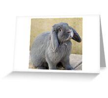 Black Rabbit Greeting Card