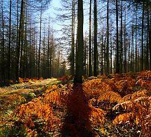 Quantock Woodland Sun by VisivoMedia