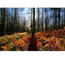 Quantock Woodland Sun Photographic Print