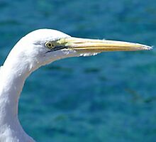 Egret by ivanfeltonglenn