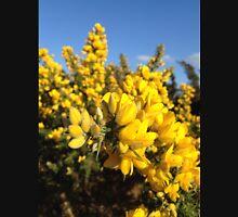 Gorse flowers (Ulex europaeus) Unisex T-Shirt
