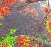 The bright colours of the plants and blossoms in the tropical zone - Los colores de las plantas y flores en la zona tropical by Bernhard Matejka