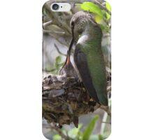 Hummingbird Momma Feeding Her Baby iPhone Case/Skin