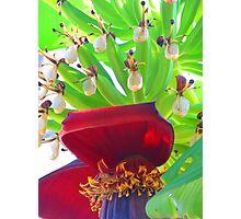 Bananas - tropical art made by the nature - Platanos - arte tropical de la madre naturaleza Photographic Print