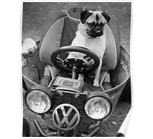 Road Pug Poster