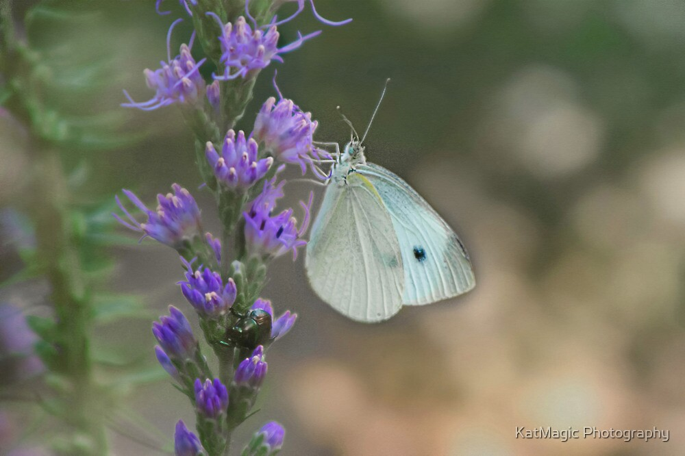 Cabbage White Butterfly... and Friend by KatMagic Photography