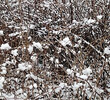 Snow on branches pattern  by HollyH14