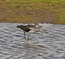 Knee Deep in Water by dilouise