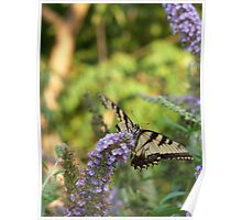 Yellow Swallowtail - Silver Lake Nature Park Poster