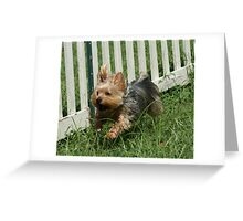 Flying Yorkie Greeting Card