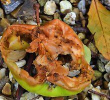 One Bad Apple in the garden. Lyme Dorset UK by lynn carter