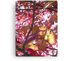 Flushed frond - Tyler State Park  Canvas Print