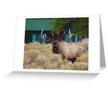 Disturbing the Peace, Bugling Elk in Mammoth Hot Springs Village Greeting Card