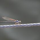 Dragon fly on a cable by bannercgtl10