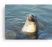 Australian Fur Seal Canvas Print