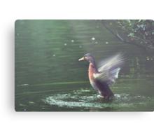 Bird in Flight at the Manx Arboretum Metal Print
