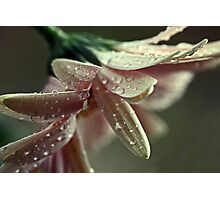 """Dancing in the Rain...."" Photographic Print"