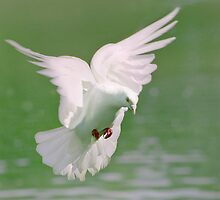Peace by DExPIX