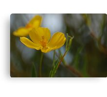 Yellow Flirt Canvas Print