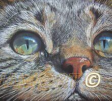 CAT EYES by jorgematins