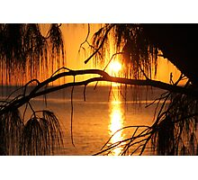 Sunset through the trees Photographic Print