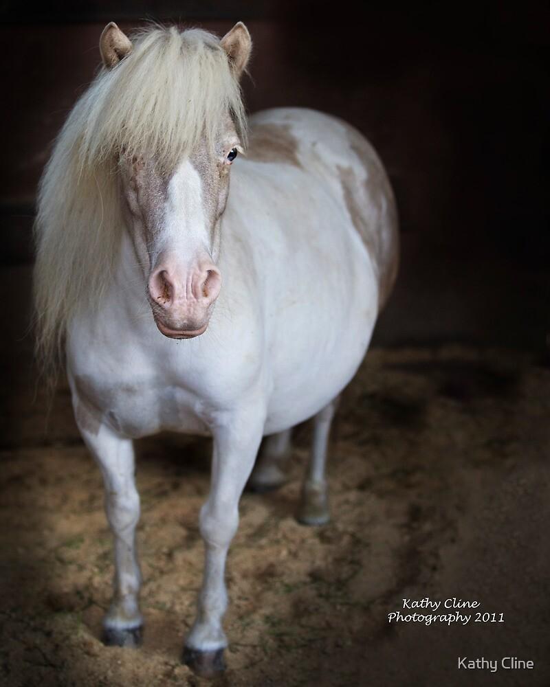 Pudgy Pony by Kathy Cline