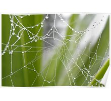 Pearls on a web ... Poster