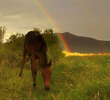 Somewhere Over The Rainbow  by Jeanne  Nations