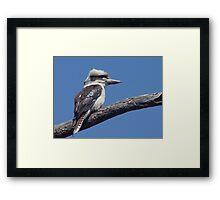 Kookaburra at Old Bar Beach Framed Print