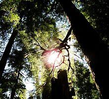 Look Up - Mt. Rainier, WA by Britland Tracy