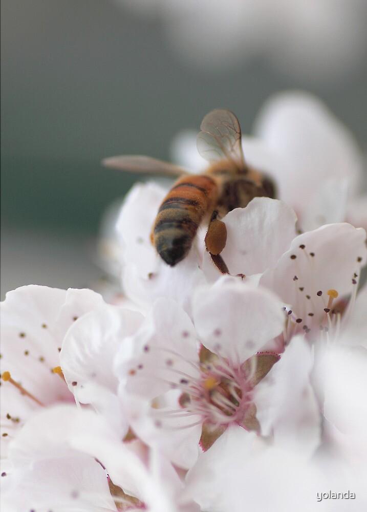 Honey Bee Heaven by yolanda