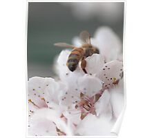 Honey Bee Heaven Poster