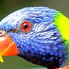 Lovely Lorikeet by Nicki Baker