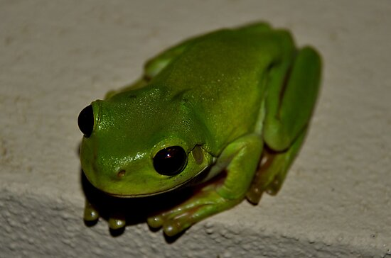Kermit  by KeepsakesPhotography Michael Rowley